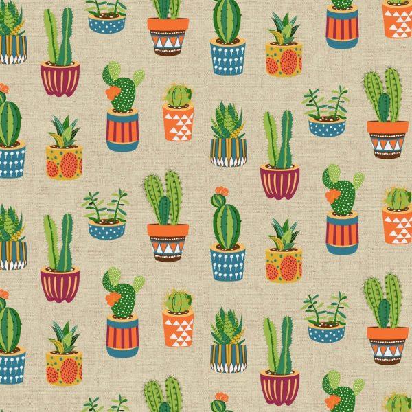 Cactus Multicolor